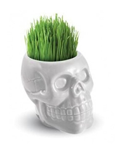 Buzzy Skull Grow Kits (White)