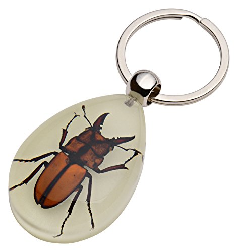 (Amazing Nature's Glow-in-the-Dark Real Insect Keychain (Stag Beetle))