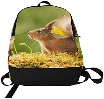 d93a60be92a5 Amazon.com: Close Red Squirrel Standing Yellow Flowers Casual ...