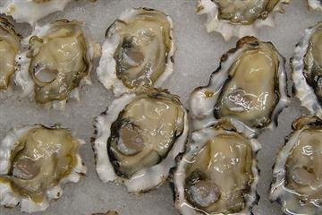 Fresh LIVE Cocktail Oysters in the - Oysters Live