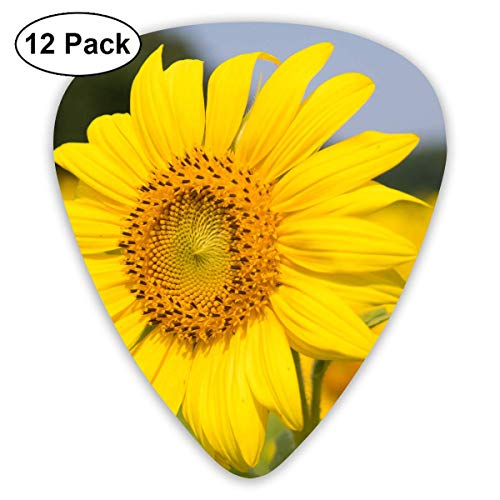 - Bloom Delicate Guitar Picks, 12 Pack Unique Designs Stylish Colorful Guitar Picks for Bass, Electric and Acoustic Guitars