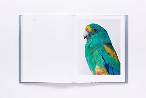 Bird Love by ABRAMS (Image #4)