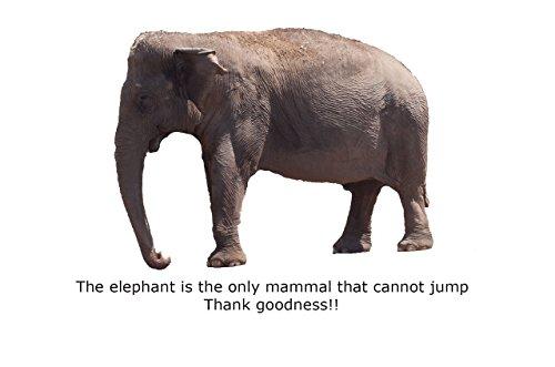 Blank Notecard - Elephant Jumping
