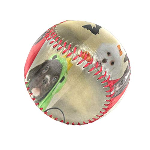 Hipster Puppy Dog Dressed In Halloween Costumes Personalized Low Impact Safety Tee Balls Indoor Baseball or Outdoor Baseballs for League Play, Practice, Competitions, Gifts, Keepsakes, Arts and Craft]()