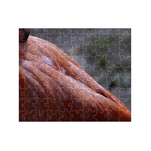 - Media Storehouse 252 Piece Puzzle of Omaha s Henry Doorly Zoo. Flamingo (8177889)