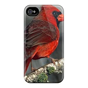 Premium Protection Red Cardinal On A Branch Case Cover For Iphone 4/4s- Retail Packaging