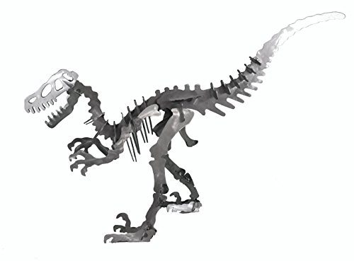 36 1/2'' x 22 3/4'' Velociraptor Dinosaur 3D metal art puzzle. This metal sculpture depicts the skeleton fossil of a Velociraptor dinosaur. Option of a round tooth skull or a sharp tooth skull. by Harkway