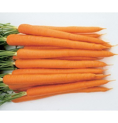 David's Garden Seeds Pelleted Seeds Carrot Sugarsnax (Orange) 100 Hybrid Seeds