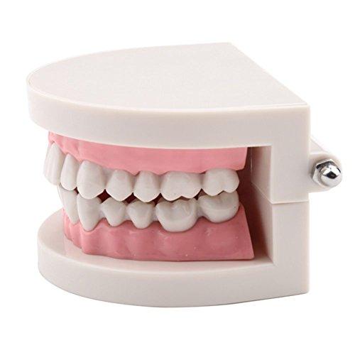 Amazon.com: YueYueZou® Child Kid Teeth Model Dental Dentist ...