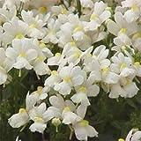 Outsidepride Nemesia White Knight - 5000 Seeds