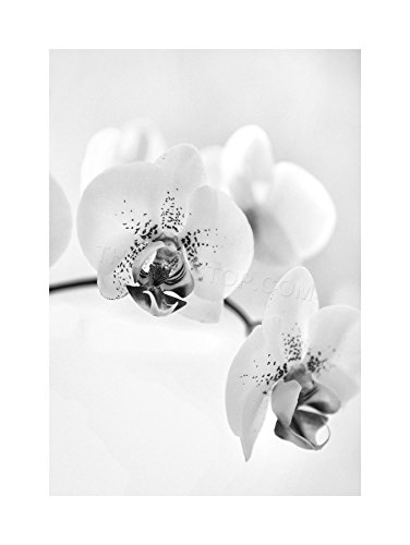 NATURE ORCHID FLOWER FRAMED F12X4368 product image