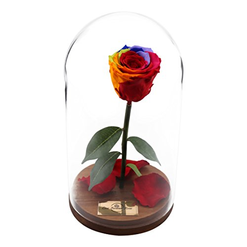 BOUTIQUE MARKET Beauty and the Beast Rose, Live Forever Rose in Glass, Live Enchanted Rose, Preserved Rose, 100% Natural LFR0002 by BOUTIQUE MARKET