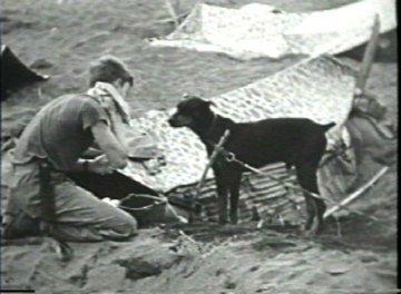 War Dog Stories