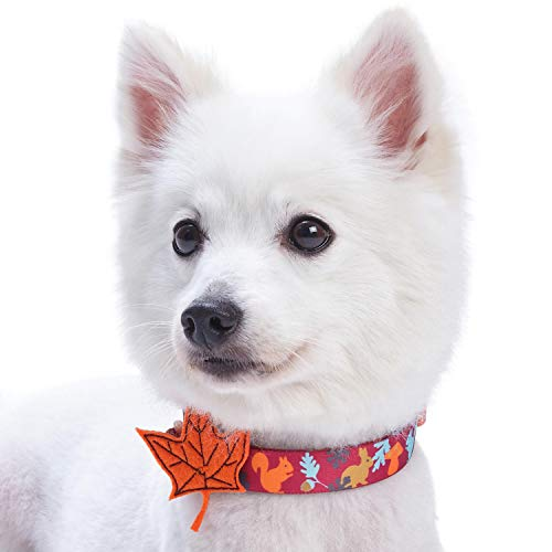 Blueberry Pet 8 Patterns Thanksgiving Fall Fun Enchanting Squirrel Designer Dog Collar with Maple, Large, Neck 18-26, Adjustable Collars for Dogs