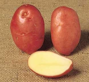 Marfona potatoes online dating