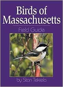 Northeastern birds: backyard guide watching feeding.