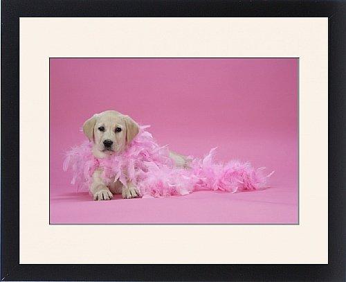 Framed Print of DOG. Labrador Retriever puppy ( 9 wks old )