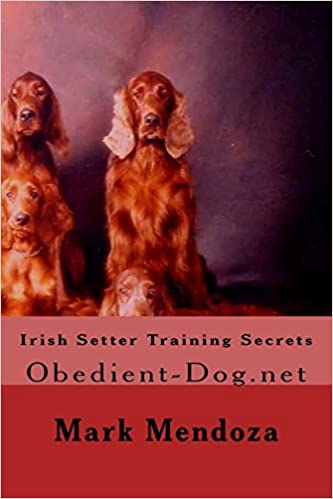 Irish Setter Dog Breed Training