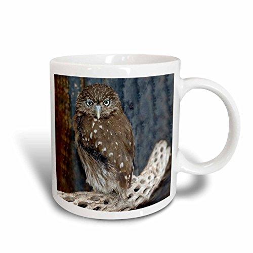 3Drose Ferruginious Pygmy Owl Us03 Bfr0131 Bernard Friel Ceramic Mug  11 Ounce