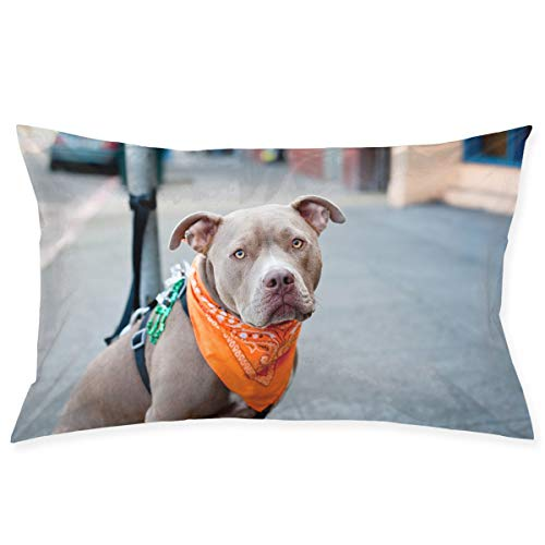"""Ministoeb Pillow Case 20""""X30"""" Humor Dog with Scarf Double Printed 100% Polyester Standard Pillowcases Super Soft Cover for Home Decorative Sleeping"""