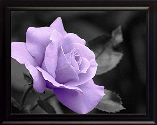 Rose Framed Photograph - 6
