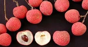 Kaimana Lychee - Tropical Fruit Trees - 1 to 2 Feet Tall