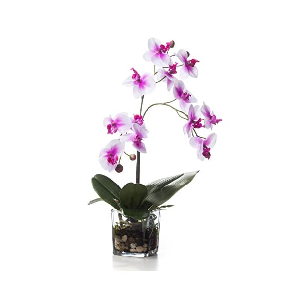 Petals – Faux Phalaenopsis Orchid Accent – Two Toned Pink – Amazingly Lifelike – Vibrant Colors – Hand-Crafted – 14 x 9 Inches