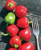 Tinker Bell Mini Red Pepper (25 Seeds)