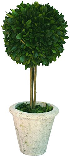Mills Floral Company Box Topiary, Single, Large, 6'' x 16'' by Mills Floral