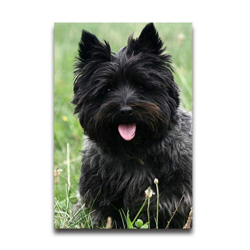Du Art Gifts Cairn Terrier Custom Poster Personal Photos Print on Photographic Paper Ready to Hang on Your Wall as a Modern Art 16