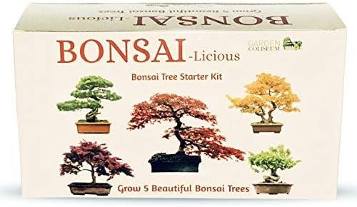 Kit de plantación de bonsáis - Planta tus propios bonsáis - Set de ...