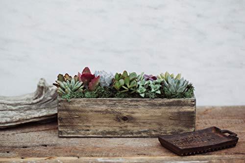 Hallmark Flowers Succulent Garden In 10-Inch Wood Trough by Hallmark Flowers (Image #1)