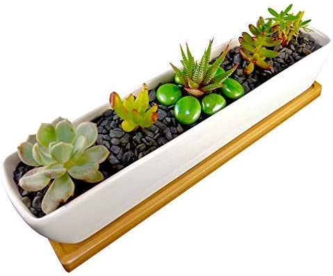 COZYHOME ESSENTIALS Succulent Planter – 11 Inch Long, Rectangle, White, Mini Ceramic Plant Pot with Bamboo Tray for Propagating and Growing Baby Succulents or Mini Cactus and Other Small Plants.