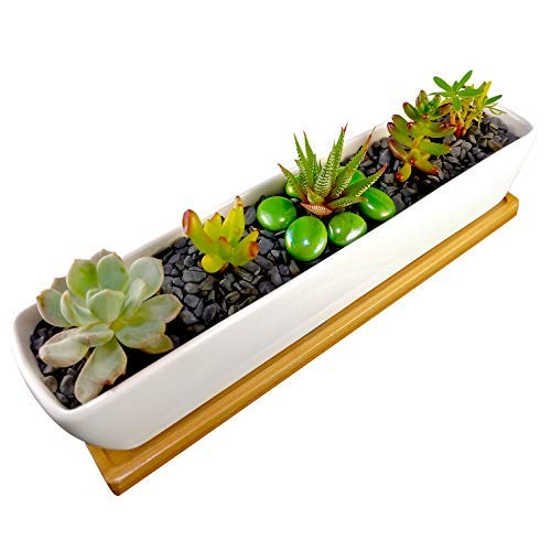 - COZYHOME ESSENTIALS Succulent Planter - 11 Inch Long, Rectangle, White, Mini Ceramic Plant Pot with Bamboo Tray for Propagating and Growing Baby Succulents or Mini Cactus and Other Small Plants.