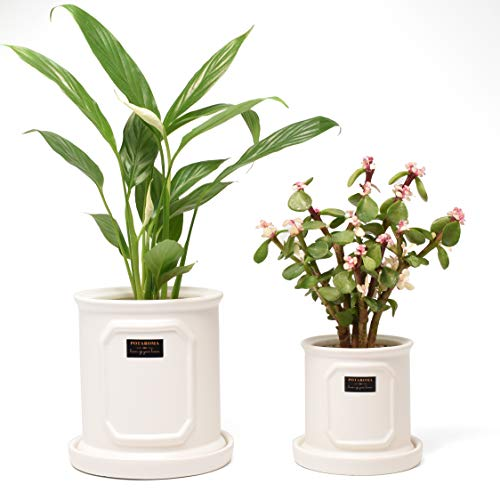 Ceramic Plant pots, 5 Inch Planter Indoor Outdoor, Cylinder White Flower Pot Set of 2 with Drainage Pottery Tray Gardening Tools