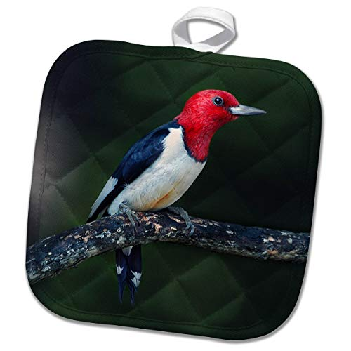 3dRose Stamp City - Birds - A red-Headed Woodpecker on The Branch of a Tree Posing for The Camera. - 8x8 Potholder (PHL_290777_1)