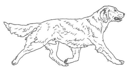Dog Rubber Stamps - Golden Retriever-7E Size: 2-1/2