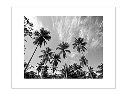 Black and White Coastal Decor Beach Photo Palm Tree and Sky 8x10 Inch Matted Photograph by Catch A Star Fine Art Photography