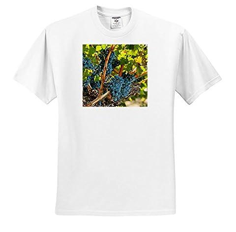 Danita Delimont - Vineyards - Usa, Washington, Red Mountain. Merlot grapes. - T-Shirts - Adult T-Shirt Large - Red Usa Merlot