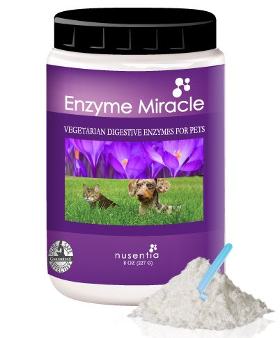 Enzymes for Dogs &