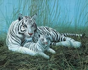 White Tigers in the Mist Jigsaw Puzzle 1000pc