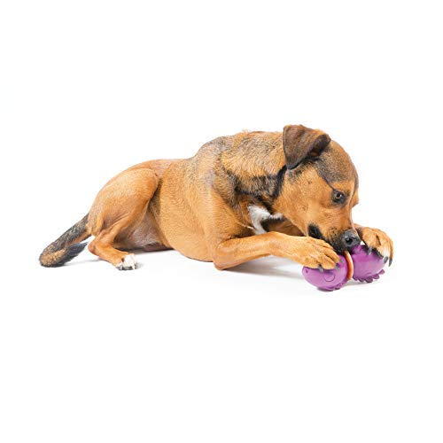PetSafe Busy Buddy Treat Ring Holding Animal Toys, Durable Chew Toys for Dogs - Dinosaur, Medium]()