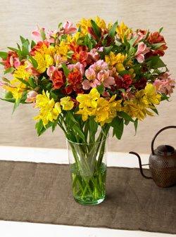 Alstromeria Peruvian Lilies by Organic Bouquet