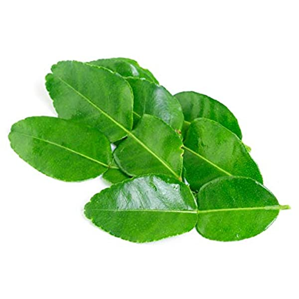 Amazon Com Fresh Makrut Kaffir Lime Leaves 0 5 Oz Grocery Gourmet Food,How To Make Jalapeno Poppers With Cream Cheese