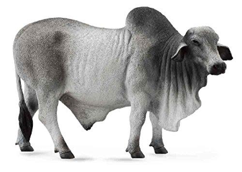CollectA 88579 Grey Polled Brahman Bull