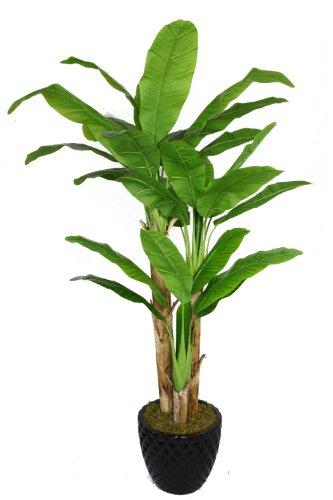 Laura Ashley VHX117205 78-Inch Banana Tree with Real Touch Leaves in 16-Inch Fiber Stone Planter (Ashley Eyeglasses Eyewear Laura)