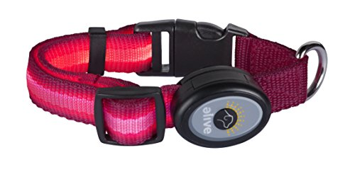 Elive LED Dog Collar for Improved Safety & Visibility During Dog Walks at Night, 3 Light Modes, 10-14 Inch, Pink