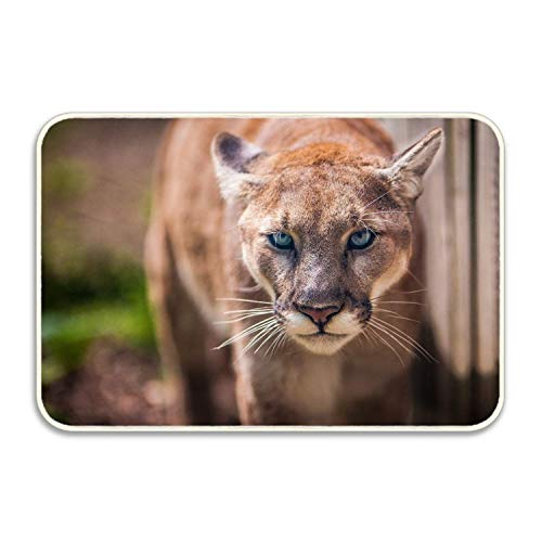 Personalized Funny Animal Cougar Cats Mats Entrance Mat Floor Rug Indoor/Bathroom Mats