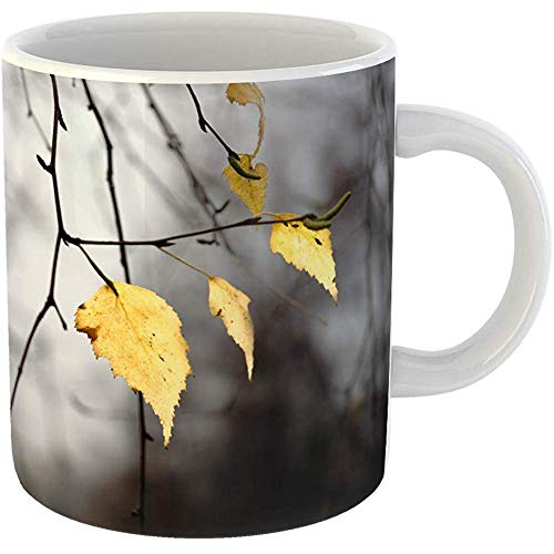 Coffee Tea Mug Gift 11 Oz Funny Ceramic Closeup View of Brightly Lit Yellow Birch Tree Leaves on Twigs Late in Autumn Gifts For Family Friends Coworkers Boss Mug