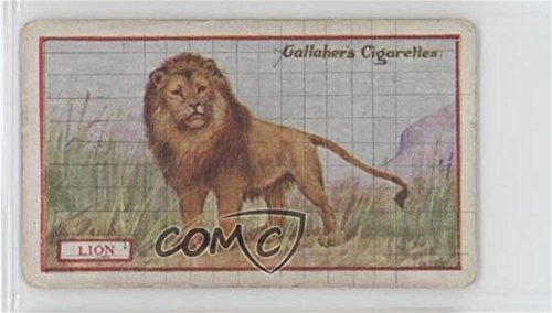 Lion Ungraded COMC Good to VG-EX (Trading Card) 1921 Gallaher Animals & Birds of Commercial Value - Tobacco [Base] #29 from Gallaher Animals & Birds of Commercial Value